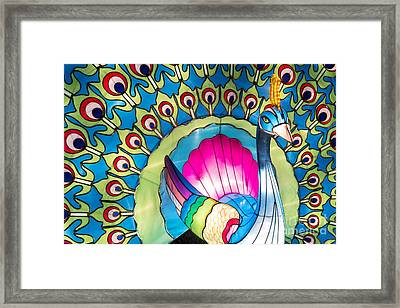 Peacock Framed Print by Tim Gainey