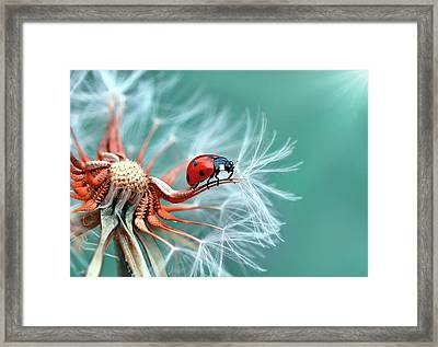 Freedoom Framed Print