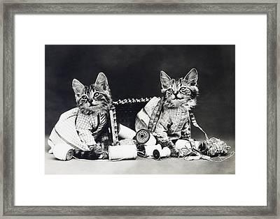Frees Kittens, C1915 Framed Print by Granger