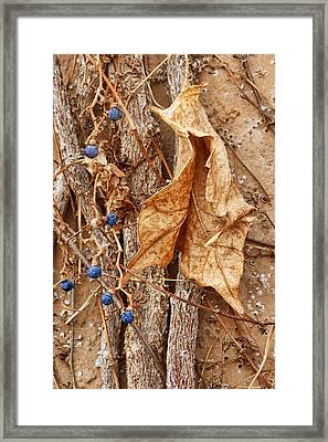 Freeze Dried Framed Print by Nikolyn McDonald
