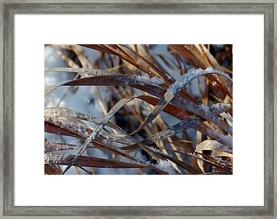 Freeze Dried Framed Print
