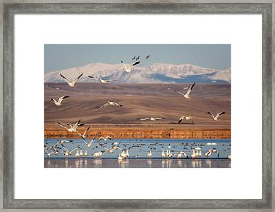 Framed Print featuring the photograph Freeze Out Lake Morning by Jack Bell