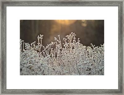 Freezing Cold Framed Print by Karen Grist