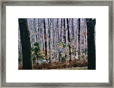 Freezing Rain Framed Print