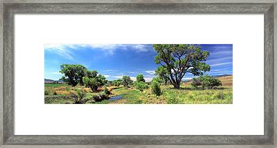 Fremont Cottonwood Trees In Field, San Framed Print by Panoramic Images