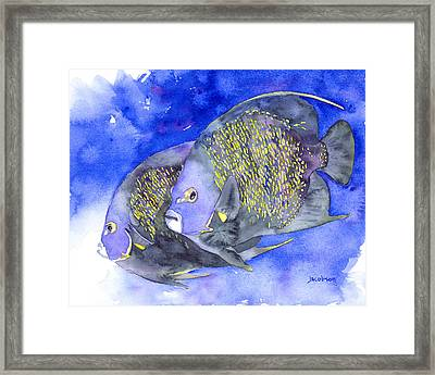 French Angelfish Framed Print