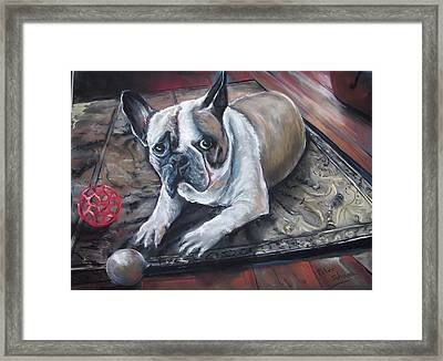 french Bull dog Framed Print