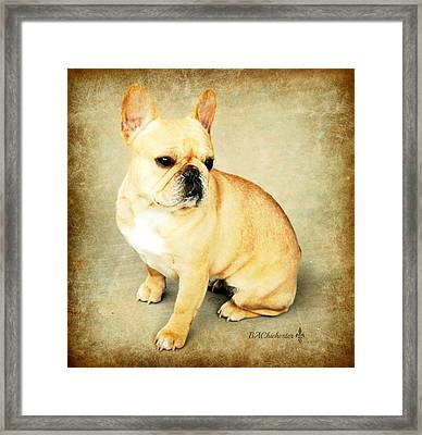 Framed Print featuring the photograph French Bulldog Antique by Barbara Chichester