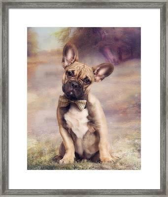 French Bulldog Framed Print by Cindy Grundsten