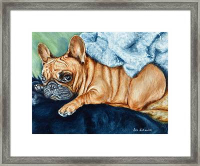 French Bulldog I Am Cute But Leave Me Alone Look Framed Print by Sun Sohovich