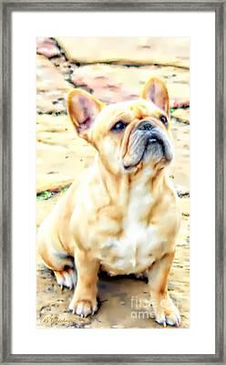 French Bulldog Portrait Framed Print by Barbara Chichester