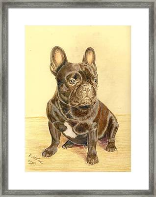 French Bulldog Framed Print by Ruth Seal