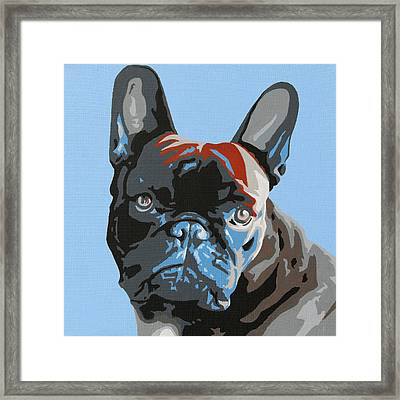 French Bulldog Framed Print by Slade Roberts
