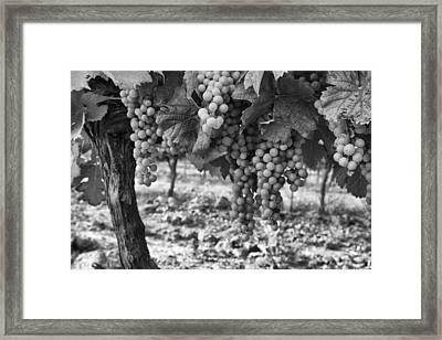 French Grapes Framed Print