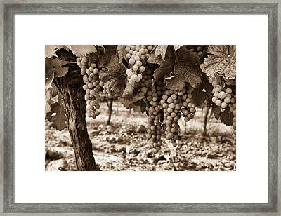 French Grapes - Toned Framed Print by Georgia Fowler