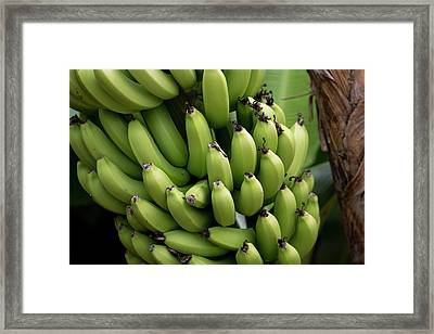 French Polynesia, Mangareva, Rikitea Framed Print by Aliscia Young