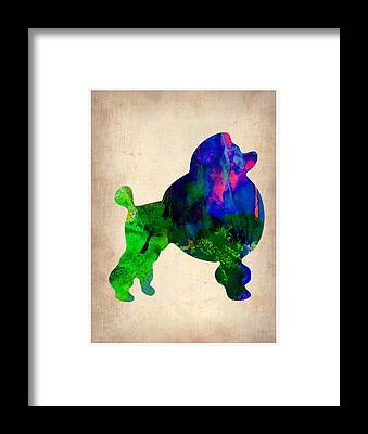 Poodle Framed Prints