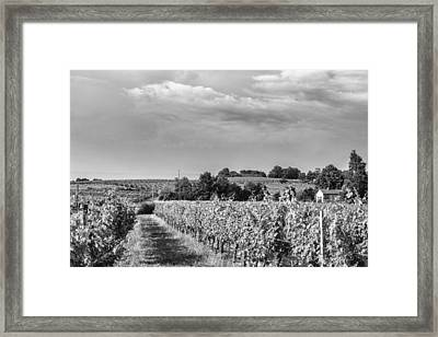 French Vineyard In Mono Framed Print