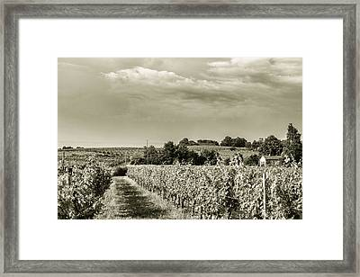 French Vineyard Toned Framed Print