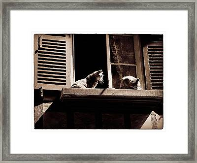 French Windowsill Cats In The Sun Framed Print
