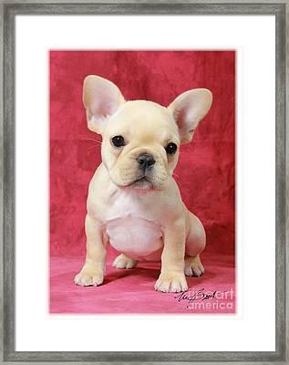 Frenchie Baby Framed Print