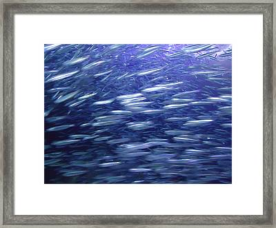 Frenzy Framed Print by Kimberly Oegerle