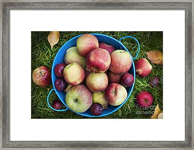 Fresh Apples Framed Print by Elena Elisseeva