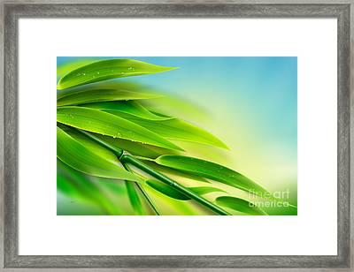 Fresh Bamboo Framed Print by Bedros Awak