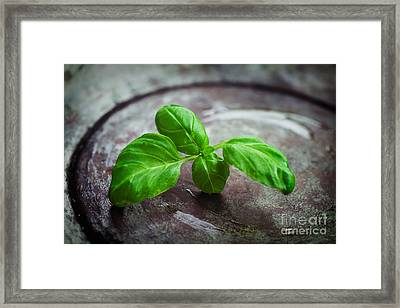 Fresh Basil Framed Print by Mythja  Photography