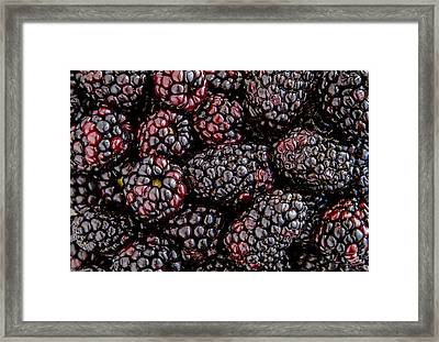 Fresh Blackberries Framed Print
