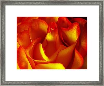 Fresh Bloom Framed Print by Tom Druin
