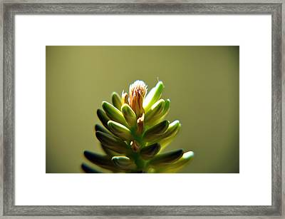 Fresh Blossom Framed Print