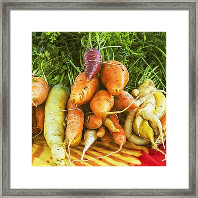 Fresh Carrots Framed Print by Vishwanath Bhat