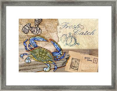 Fresh Catch Blue Crab Framed Print by Paul Brent