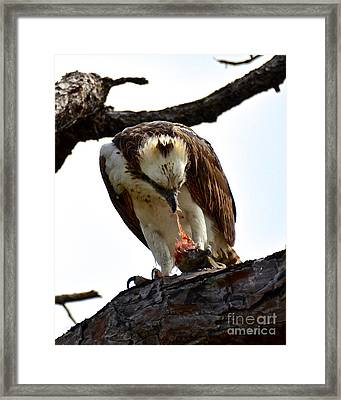 Fresh Catch Framed Print by Carol  Bradley