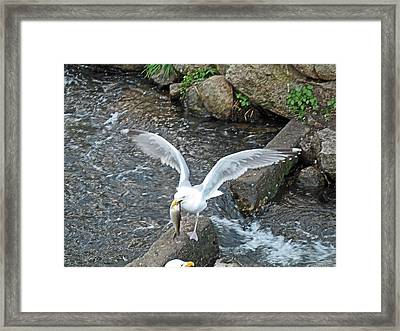 Fresh Catch Of The Day Framed Print