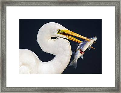 Fresh Catch Of The Day Framed Print by Paulette Thomas