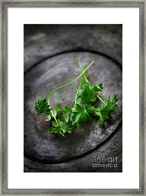 Fresh Celery Framed Print by Mythja  Photography