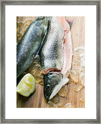 Fresh Charr, Lemon And Ice Cubes Framed Print