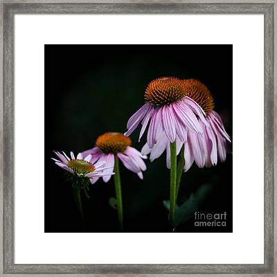 Fresh Echinacea Framed Print by Renee Barnes