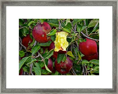Fresh Fruit Framed Print by Frozen in Time Fine Art Photography