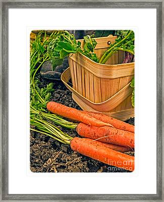 Fresh Garden Vegetables Framed Print by Edward Fielding