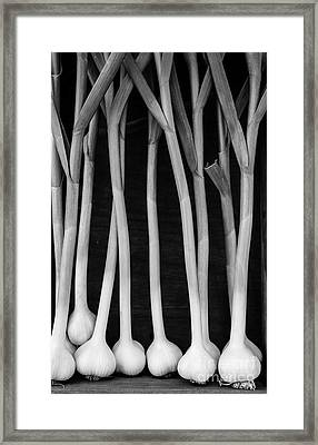 Fresh Garlic Bulbs Black And White Framed Print by Edward Fielding
