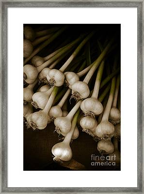 Fresh Garlic Framed Print by Edward Fielding