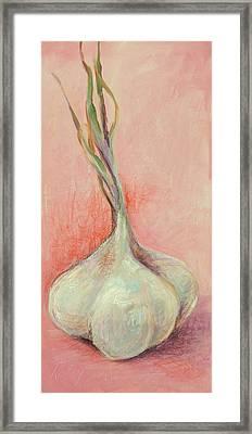 Fresh Garlic Framed Print by Kelley Smith