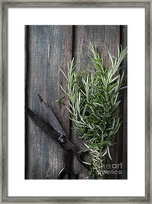 Fresh Herbs Framed Print by Mythja  Photography