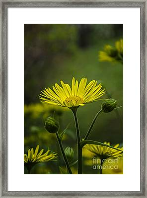 Framed Print featuring the photograph Fresh In Juice by Bruno Santoro