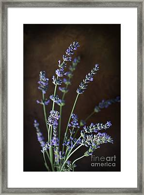 Fresh Lavender Framed Print