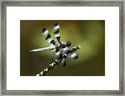 Fresh Morning Dragonfly Framed Print by Christina Rollo