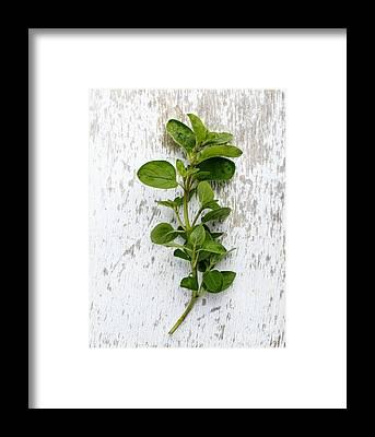 Herbs Framed Prints